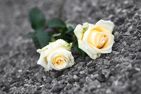 roses on gravel