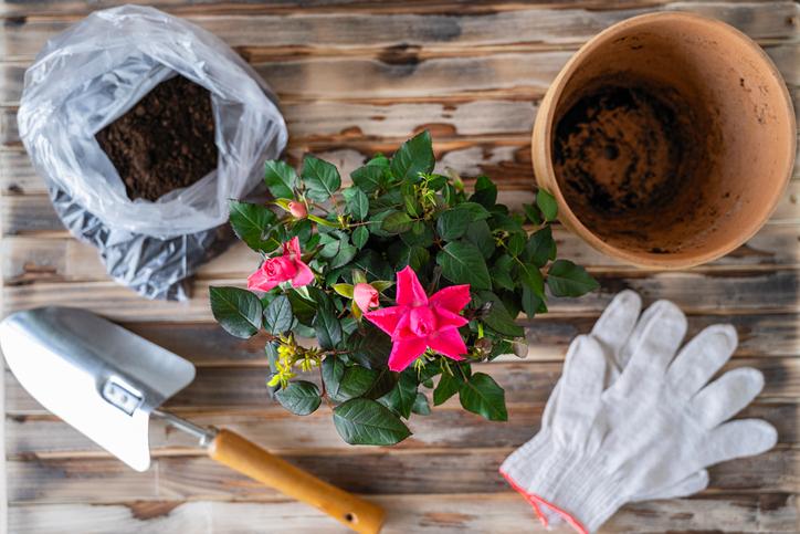 Gardening Tools roses