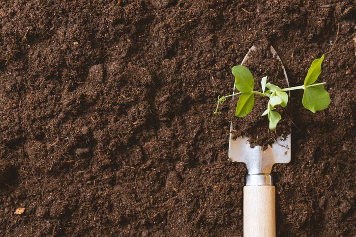 garden tool seedling