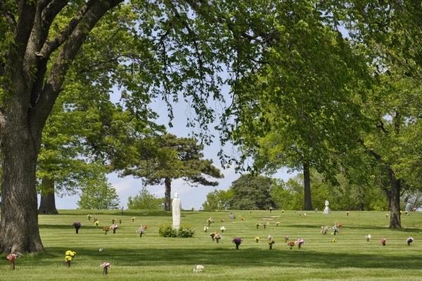 cemetery-trees