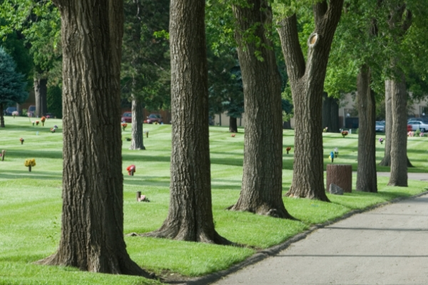 cemetery-trees-along-road